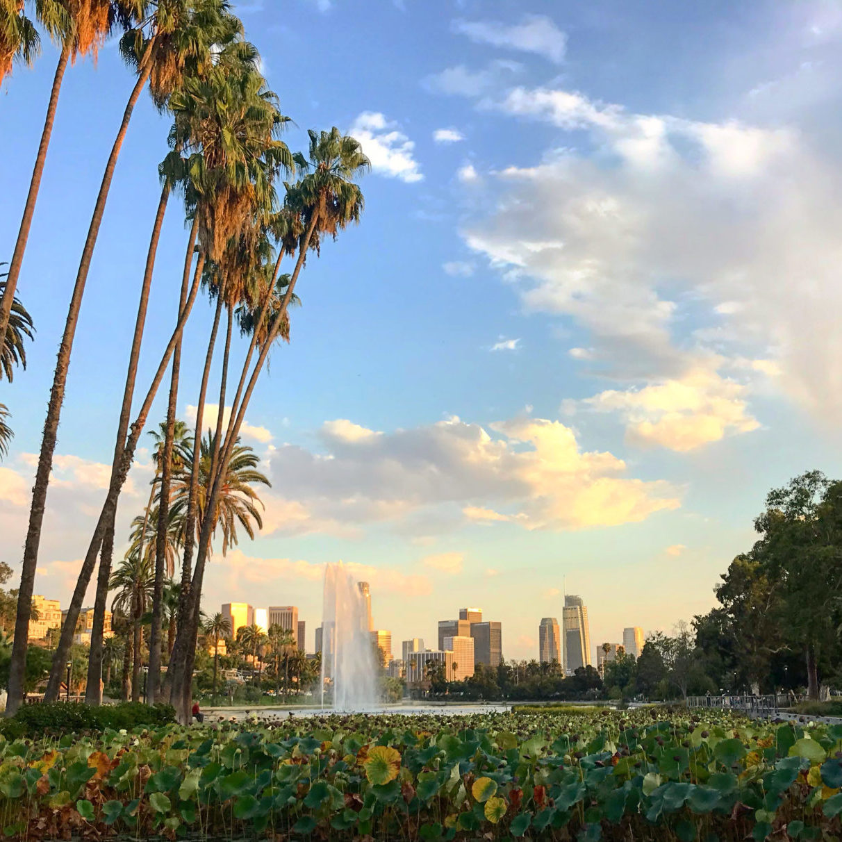 Echo Park Lake With Lotus Flowers And Los Angeles Skyline In The Background